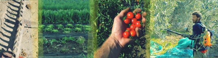 Agricoltura Coraggio